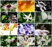 Sistema de flores macras Imagenes de archivo