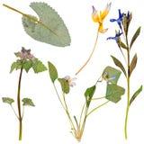 Sistema de flores salvajes presionadas Imagen de archivo