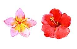 Sistema de flores tropicales, ejemplo de la acuarela Imagen de archivo libre de regalías