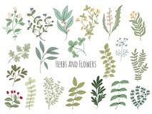 Sistema de flores y de hierbas Imagenes de archivo
