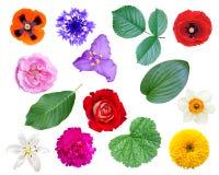 Sistema de flores y de hojas Imagenes de archivo