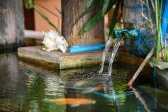 Sistema de fluxo da circulação da água com os peixes do koi na lagoa fotografia de stock royalty free