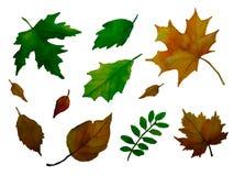 Sistema de fondo de las hojas Vector stock de ilustración