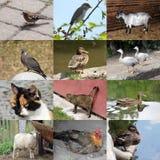 Sistema de 12 fotos de los animales Fotografía de archivo