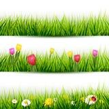 Sistema de fronteras de la hierba stock de ilustración