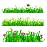 Sistema de fronteras inconsútiles con la hierba verde y las flores frescas stock de ilustración