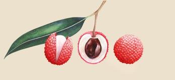 Sistema de frutas del lichi de la acuarela stock de ilustración