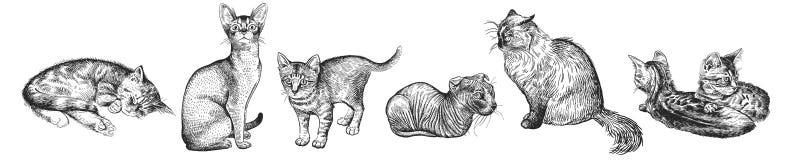 Sistema de gatitos lindos Animales domésticos caseros aislados en el fondo blanco Fotografía de archivo libre de regalías