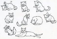 Sistema de gatos dibujados tinta Imagen de archivo libre de regalías