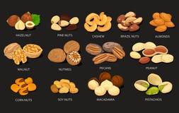 Sistema de granos y habas de las nueces de la comida Foto de archivo libre de regalías