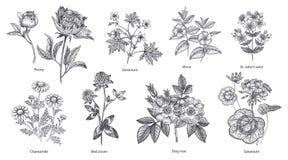 Sistema de hierbas y de plantas médicas fotografía de archivo libre de regalías