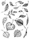 Sistema de hojas stock de ilustración