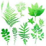 Sistema de hojas de la acuarela del jardín Imágenes de archivo libres de regalías