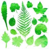 Sistema de hojas de la acuarela del jardín Imagenes de archivo