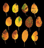 Sistema de hojas de otoño aisladas Imagen de archivo libre de regalías