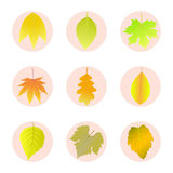 Sistema de hojas de otoño de los iconos Foto de archivo