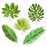 Sistema de hojas de palma tropicales, ejemplo del vector libre illustration