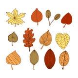 Sistema de hojas decorativas del garabato del otoño Fotografía de archivo libre de regalías