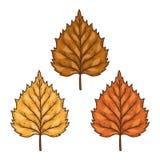 Sistema de hojas del abedul del otoño Ilustración del vector en el fondo blanco Fotos de archivo