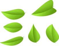 Sistema de hojas del verde aisladas Imagen de archivo