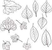 Sistema de hojas lineares del dibujo Fotos de archivo libres de regalías