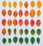 Sistema de hojas de otoño en un fondo blanco Una colección de hojas marrones vivas del amarillo Plantas de la naranja verde en bl Imagen de archivo