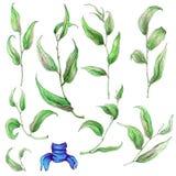 Sistema de hojas pintadas a mano de la acuarela Imagen de archivo libre de regalías