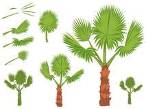 Sistema de hojas redondas de la palma de fan Fotos de archivo libres de regalías