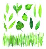 Sistema de hojas verdes de la acuarela stock de ilustración