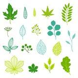 Sistema de hojas y de elementos del verde Fotos de archivo libres de regalías