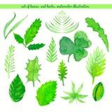 Sistema de hojas y de hierbas Ejemplo de la acuarela del vector Fotos de archivo