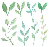 Sistema de hojas y de ramas Foto de archivo libre de regalías