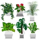 Sistema de houseplants en conserva Imagen de archivo libre de regalías