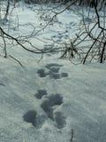 Sistema de huellas de un bosque de las liebres Imágenes de archivo libres de regalías