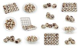 Sistema de huevos de codornices aislados en blanco Fotografía de archivo libre de regalías