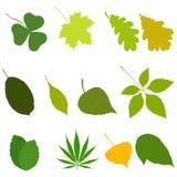 Sistema de iconos de las hojas aislados en el fondo blanco Ilustración común del vector Imagen de archivo