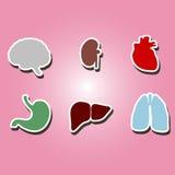 Sistema de iconos del color con los órganos del cuerpo humano Imagen de archivo libre de regalías