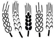 Sistema de iconos del trigo, Fotos de archivo libres de regalías