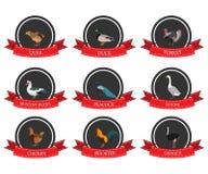 Sistema de iconos planos con un nombre del pájaro Fotos de archivo libres de regalías