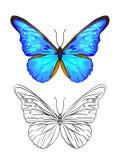 Sistema de imágenes del color y del esquema de una mariposa stock de ilustración