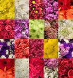 Sistema de imágenes de diversas flores foto de archivo libre de regalías