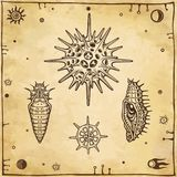 Sistema de imágenes gráficas: muñeca de un insecto, larva, radiolario
