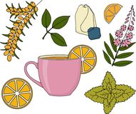 Sistema de infusión de hierbas Ejemplo de la trama de la taza de infusión de hierbas, de las plantas y de las frutas stock de ilustración