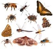 Sistema de insectos marrones del color aislados en blanco Fotografía de archivo libre de regalías