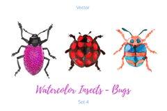 Sistema de insectos pintados a mano de la acuarela, vector Imágenes de archivo libres de regalías