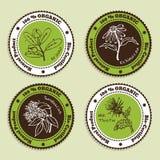 Sistema de insignias orgánicas naturales del producto Fotografía de archivo libre de regalías