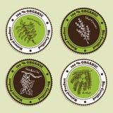 Sistema de insignias orgánicas naturales del producto Foto de archivo libre de regalías