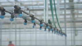 Sistema de irrigação de gotejamento na estufa na hidroponia em agro-guardar dentro video estoque