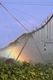 Sistema de irrigação em um campo de tabaco fotografia de stock royalty free