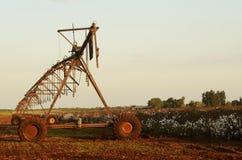 Sistema de irrigação em um campo do algodão foto de stock